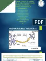 Neurociencias Terminaciones Nerviosas Exposición.