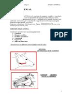 PULSO ARTERIAL.pdf