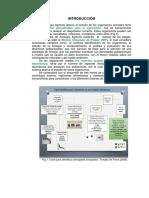Morfologia Externa 2014-1