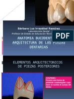 ANATOMIA BUCODENTARIA DEFINITIVA No2.ppt