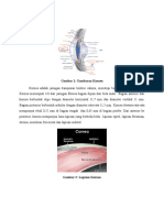 Anatomi Fisio