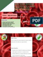 1-Medula-ósea(1).pdf