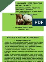 Insectos Polaga Del Algodonero