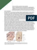 Suport 6 osos.pdf