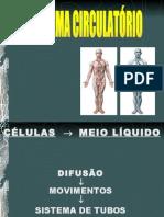 Anatomia Dos Vasos