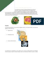 Estructura y función del lisosoma.docx