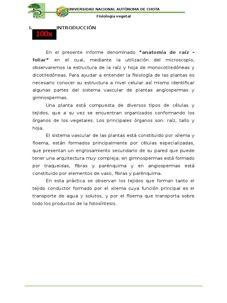 Único Anatomía Y Fisiología Hojas De Trabajo Para La Universidad ...