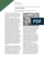 FAO AGUA DE COCO EMBOTELLADA.pdf