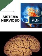 Sesion 2-Sistema Nervioso Central y Periferico