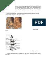 Mineral Optik Merupakan Salah Satu Cabang Ilmu Geologi Yang Mempelajari Tentang Mineral Yang Terkandung Pada Suatu Batuan