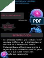 EL SISTEMA NERVIOSO ING SEMANA 06.pptx
