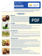 Apple Diseases Diagnostic Key