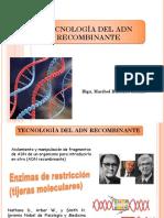 Biotecnologia Vegetal Transgenicos