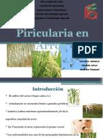 presentacion piricularia
