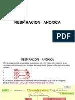 4. RESPIRACION ANOXICA