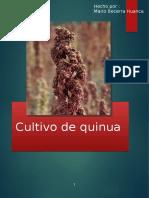 038 b Quinua