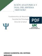 organizacion estructural y funcional del sistema nervioso.pdf