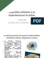 Organelos y Celulas