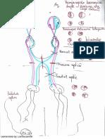 Neurologie LP