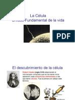 CELULA-1
