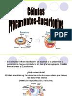 146816477 Tipos Celulares Eucariontes Procariontes