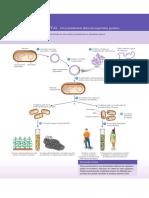 MICROBIOLOIGA LIVRO.pdf