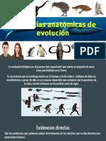 Evidencias Anatómicas de Evolución