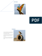 PARABA FRENTE ROJA.pdf