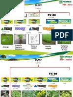 Programa de Nutricion Foliar -Farmex