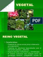 Reino Vegetal 2014