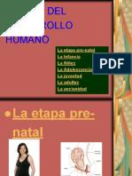 080512_etapasdeldesarrollohumano
