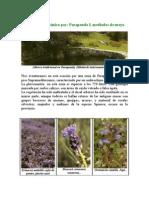 Breve paseo botánico por Parapanda