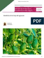 Beneficios de La Hoja Del Aguacate - IMujer