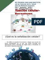 CAPITULO SEÑALIZACION CELULAR-RECEPTORES.ppt
