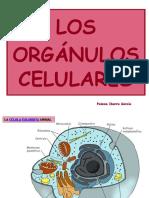 Los Orgnulos Celulares