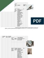 Grupo Taxonomico Marianne