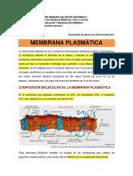 Membrana Celular Documento