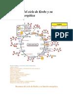 Resumen del ciclo de Krebs y su función energética.pdf