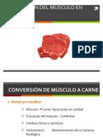 Conversión Del Musculo a Carne