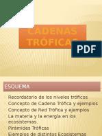 cadenastrficas-130501125832-phpapp02