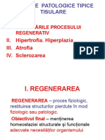 4. Procese Patologice Tipice Tisulare (1)