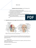 Anatomy - Face.pdf