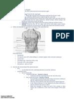 Anatomy - Abdominal Wall