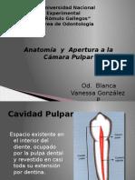 Anatomia y Apertura