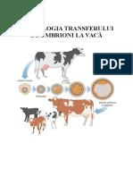 Transfer de Embrioni La Vaca