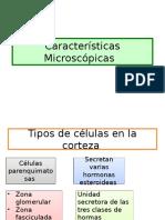 Caracteristicas Microscopicas de Suprarrenales