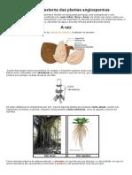 Morfologia Externa Das Plantas Angiospermas