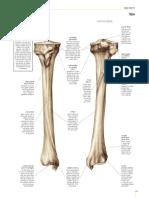 Esqueleto 4 Tp5