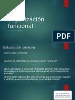 Organización Funcional LURIA