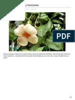 ceibal.elpais.com.uy-Las plantas partes y funciones.pdf